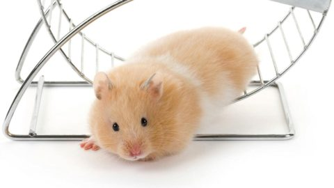 Getting The Hamster Off The Wheel:  How to Manage Overwhelm